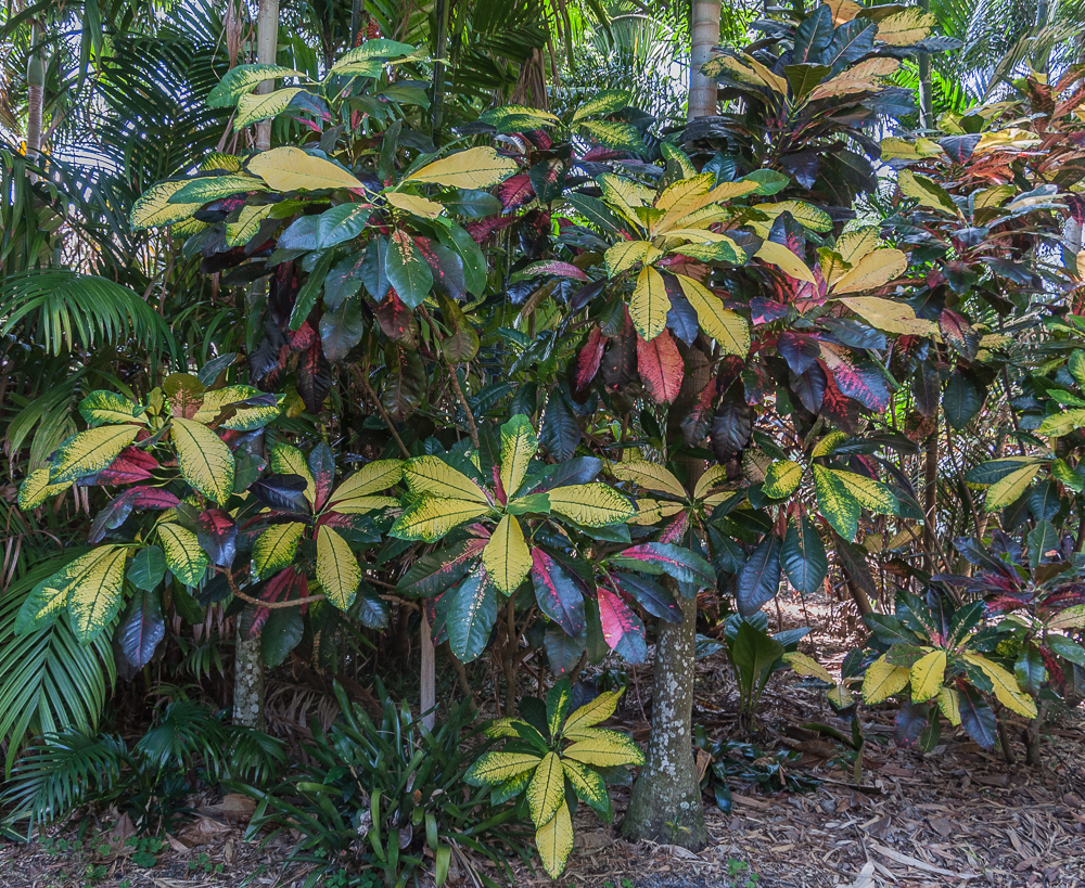 Mike's crotons-19.jpg