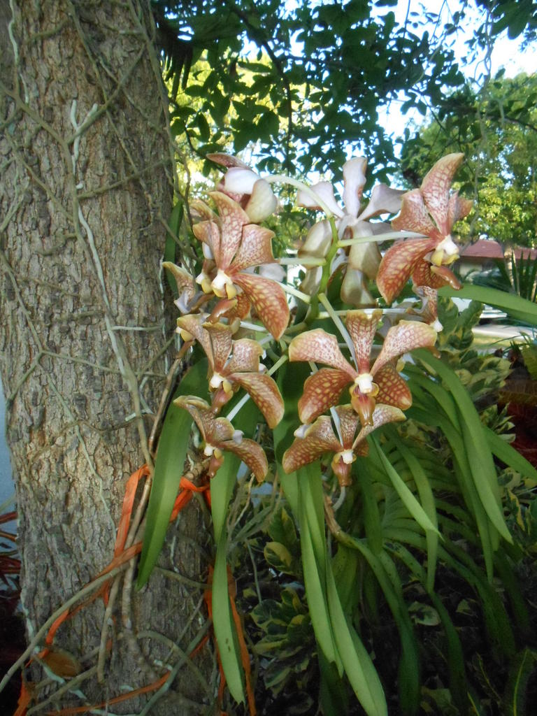 Orchid A.jpg