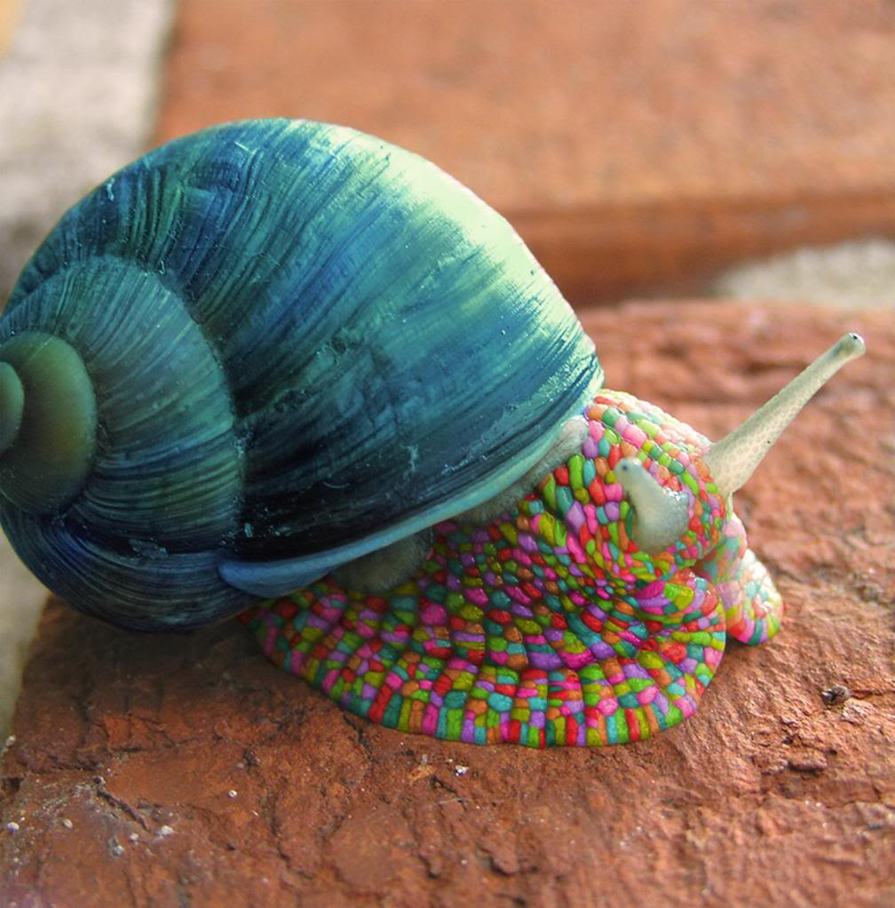 snailpsychedelicsnail.jpg
