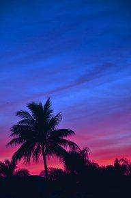 palmisland