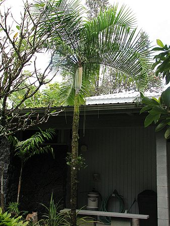 hawaii county black singles Find places to stay in hawaii on airbnb  stainless steel and black kitchen appliances  a stunning home base for singles or couples relaxing during a fun.